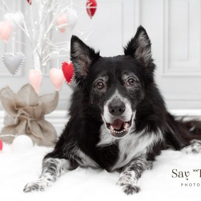 Valentine's Day Mini Sessions at Canine Creek Feb. 9th & 10th